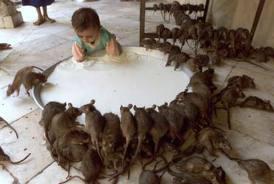Feed my babies... all my babies!