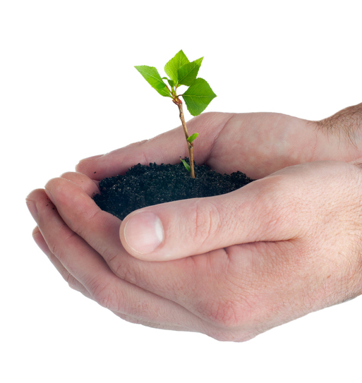 Your seedling idea